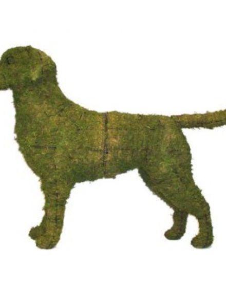 Labrador Retriever 75x100x24 cm met mos