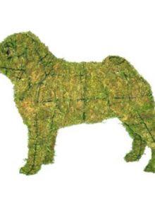 Mopshond 41x50x21 cm met mos