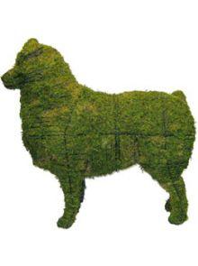 Australische herder 79x84x31 cm met mos