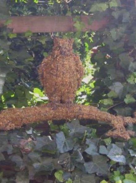 Uil op boom  43x56x28 cm met mos