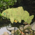 Koi Karper 40x50x31 cm met mos