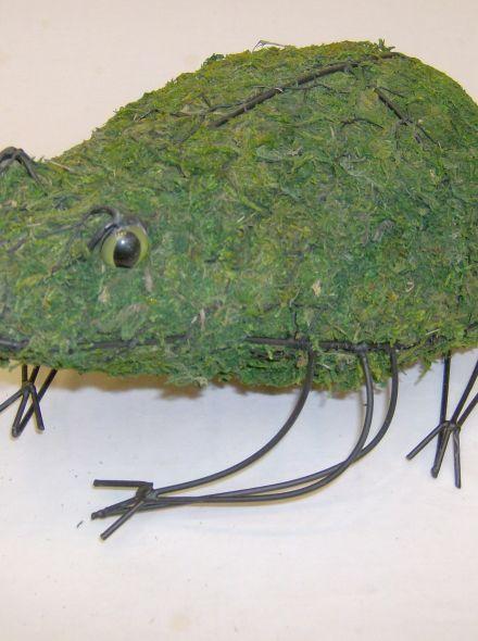 Kikker 15x36x33 cm met mos