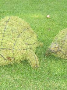 Schildpad 20x48x30 cm met mos