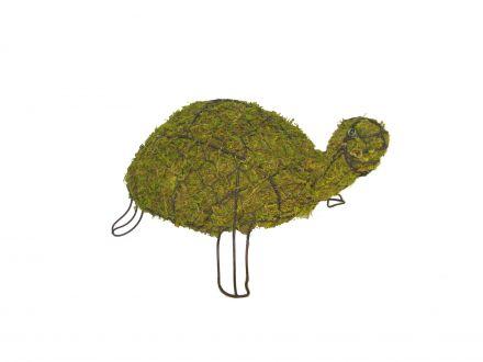 Schildpad 30x74x48 cm met mos