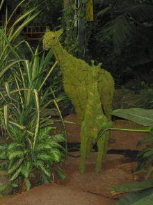 Giraffe 152x91x36 cm met mos