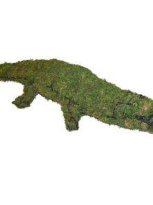 Krokodil 23x123x50 cm met mos