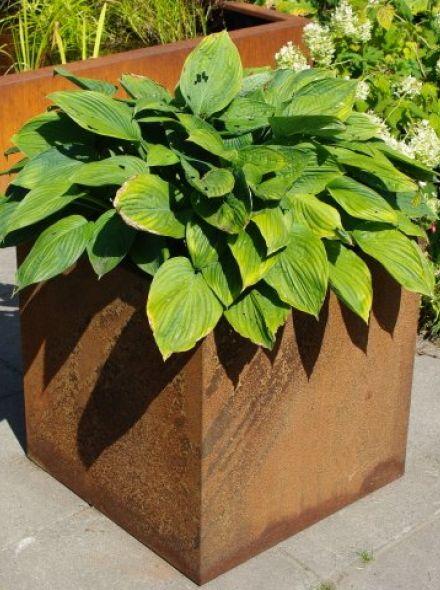 Plantenbak 60 x 60 x 58 cm cortenstaal met bodem