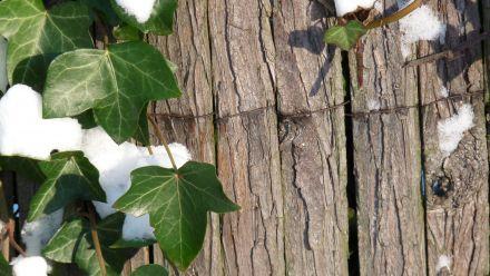 Natuurlijke tuinschermen - Natuurlijke schuttingen - riet - wilg - heide - bamboe