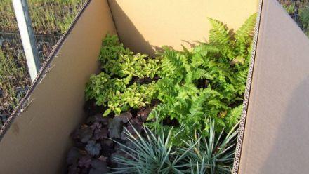 Tuinplanten per post