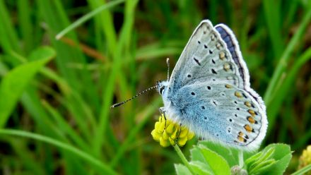 Bloemenmengsel voor bijen - Bloemenmengsel voor vlinders