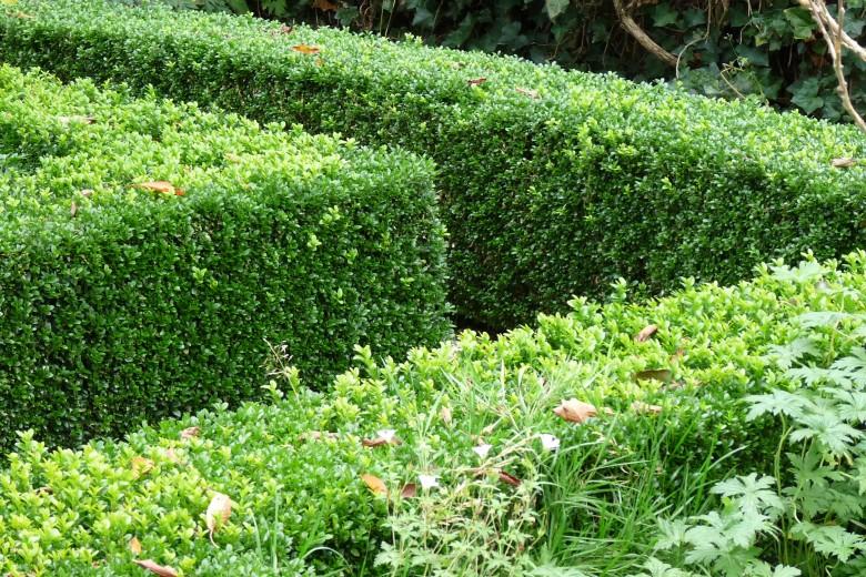 DCM Organische Meststof voor Buxus 1500 gram (Buxusmest, +/- 40 planten)