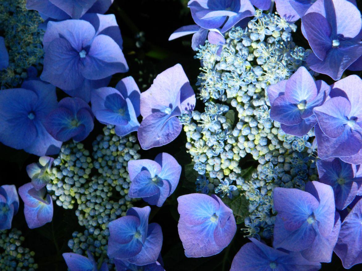 DCM Organische Meststof (Bemesting voor Rhododendron - Hortensia - Azalea 200 gram - +/- 7 planten)