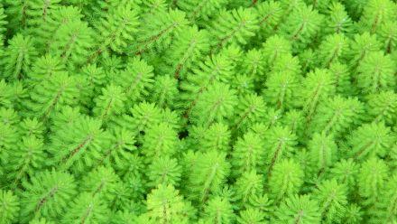 Zuurstofplanten - Onderwaterplanten in mand