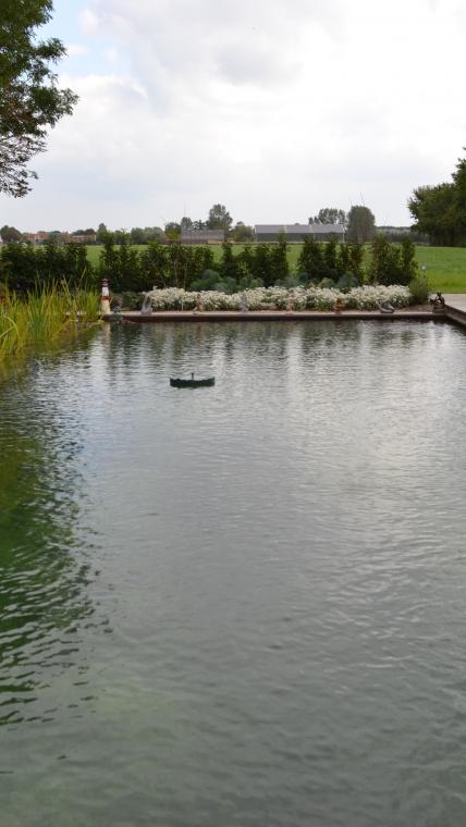 Zwemvijver met plantenfilter