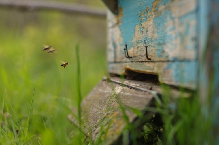 Het Bijeffect: lessen van bijen voor na de crisis
