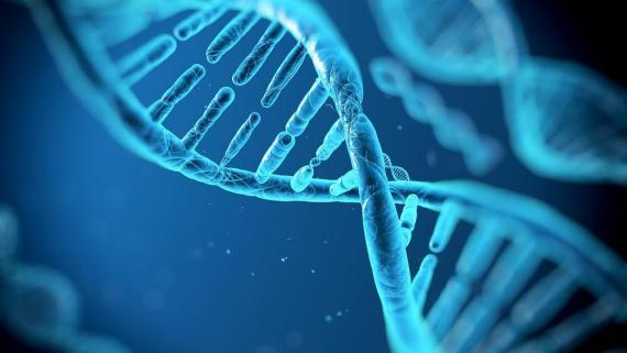 Genetisch modificeren