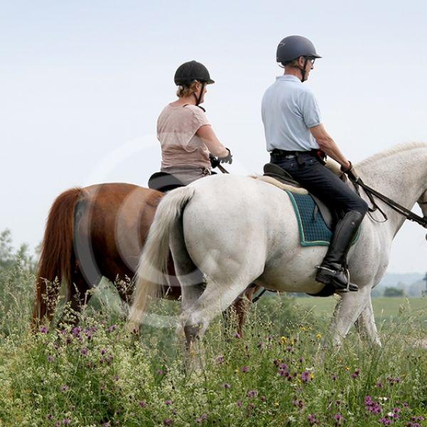 Paardrijden op de dijk