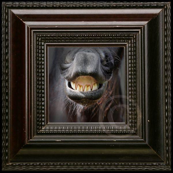 Paarden lach