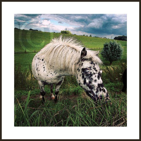 Gestippelde pony