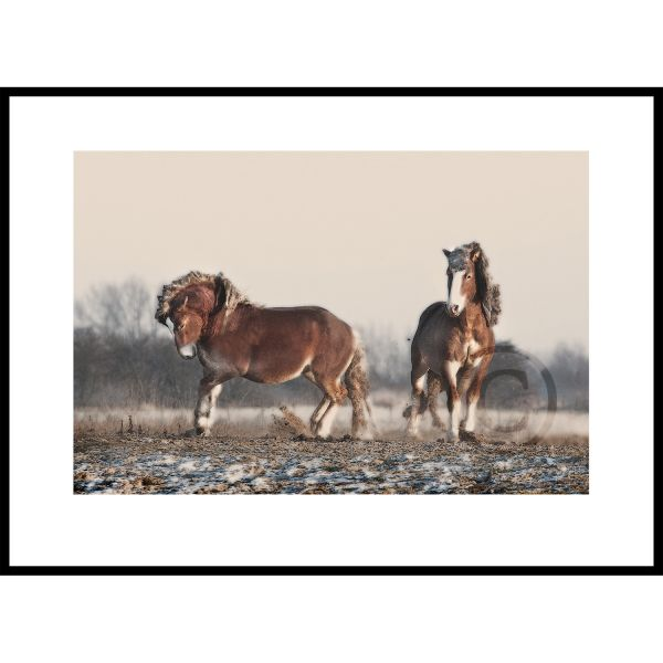 Paardendans
