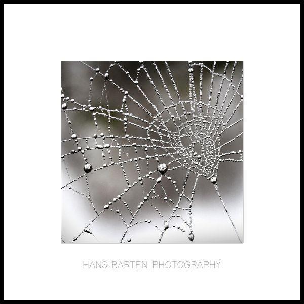 Dauwdruppels op een spinnenweb