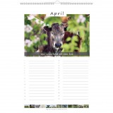 Koeien & Spreuken Verjaardagskalender