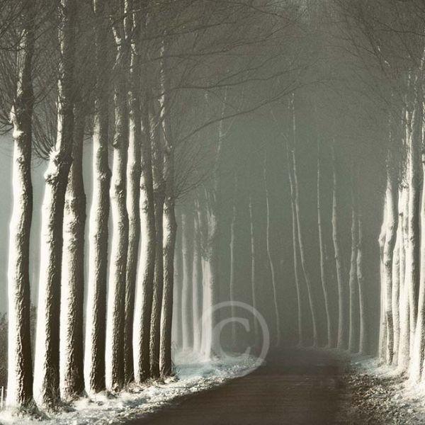 Bomen laan