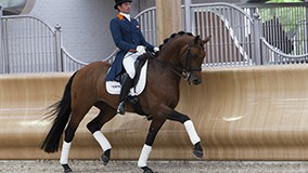 Platinum Stable presents dressage studs