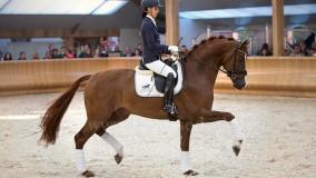 Eye Catcher en Estoril geselecteerd voor WK jonge paarden in Verden