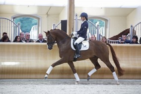 WC Young Dressage Horses starts today