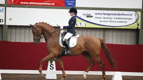 6 Horses of Platinum Stable in Horsefood competition