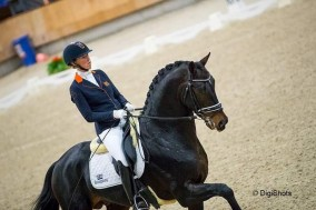 Kirsten Brouwer with Hummer to 2nd place in stallion competition Ermelo