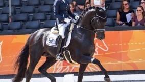Imperio Platinum loopt met Cynthia naar een prachtige 2e plaats in de Sublicup Zwarte Water, score 84,2%