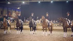 Fantastische show met de hengsten op Flanders Horse Expo