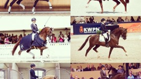 Hengsten op Flanders Horse Expo zaterdagavond a.s.