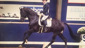 Cynthia wordt met Imperio Platinum 7e op de KWPN young dressage horses
