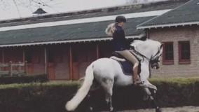 Nieuw paard op stal PRE hengst Nilo