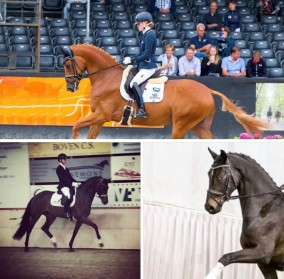 Der Kehdinger, Ichiban en Iwardo winnen selecties in Woudenberg