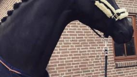 Der Kehdinger wint Utrechtse selecties