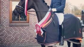 Fokproduct Ichiban van Kirsten en Emile Utrechts Kampioen met 77,7%