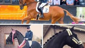 3 paarden van Stal Brouwer naar de Nederlandse Kampioenschappen Indoor 2019