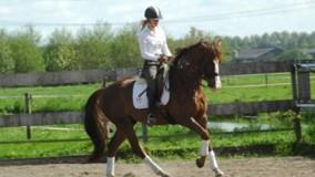 Kirsten met Winse Boy naar een 2e en 3e plaats in Hoofddorp