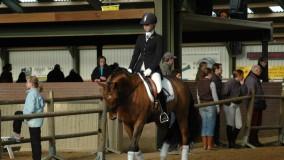 Een mooie 1e plaats voor Kirsten met Velvet Dream in Zoelen
