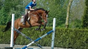 Twee veel belovende paarden op stal gearriveerd