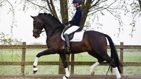 Presentatie van Kirsten Brouwer met de 4-jarige Bleu Horse Romanov x Ferragamo