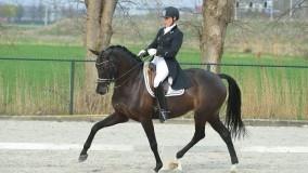 Een mooie 2e plaats voor Annemarie-Brouwer met Binoeska in de Prix st George in Nieuw Vennep