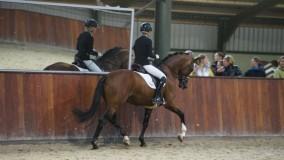 Stal Brouwer met 4 paarden naar Prinsenstad