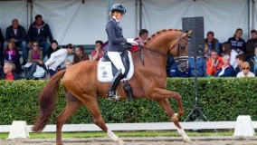 Platinum Stable very successful during WC Young Horses