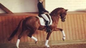 Waanzinnig fijne paarden