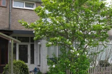 Slauerhoffstraat 14 Zwijndrecht
